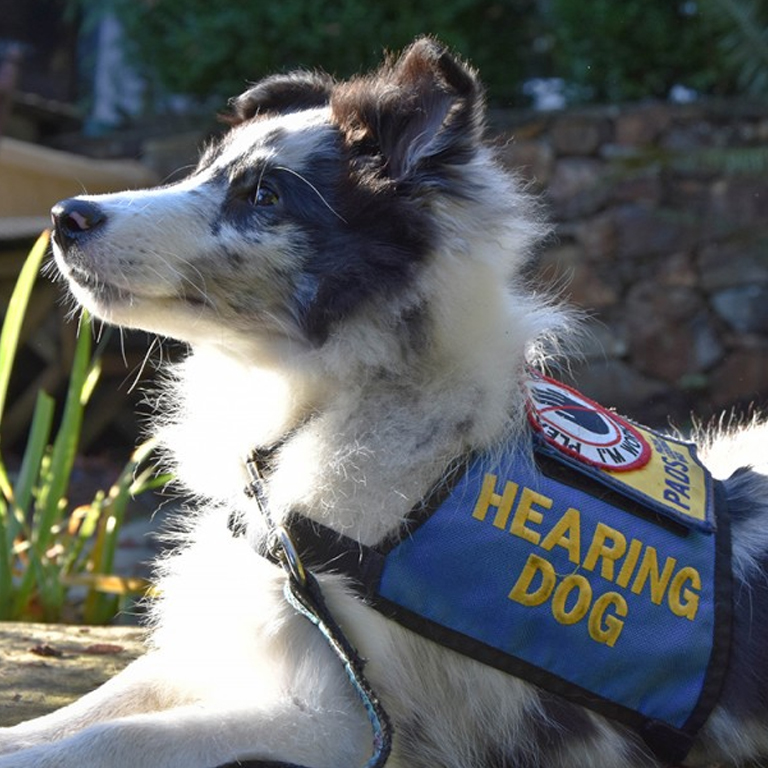 Can Any Dog Be A Service Dog In Canada