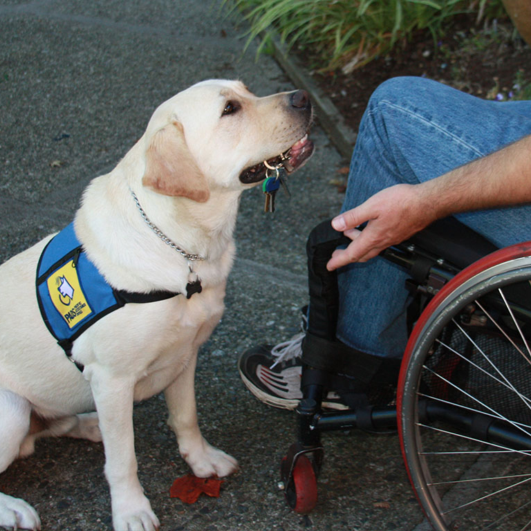 Adopt Trained Service Dog