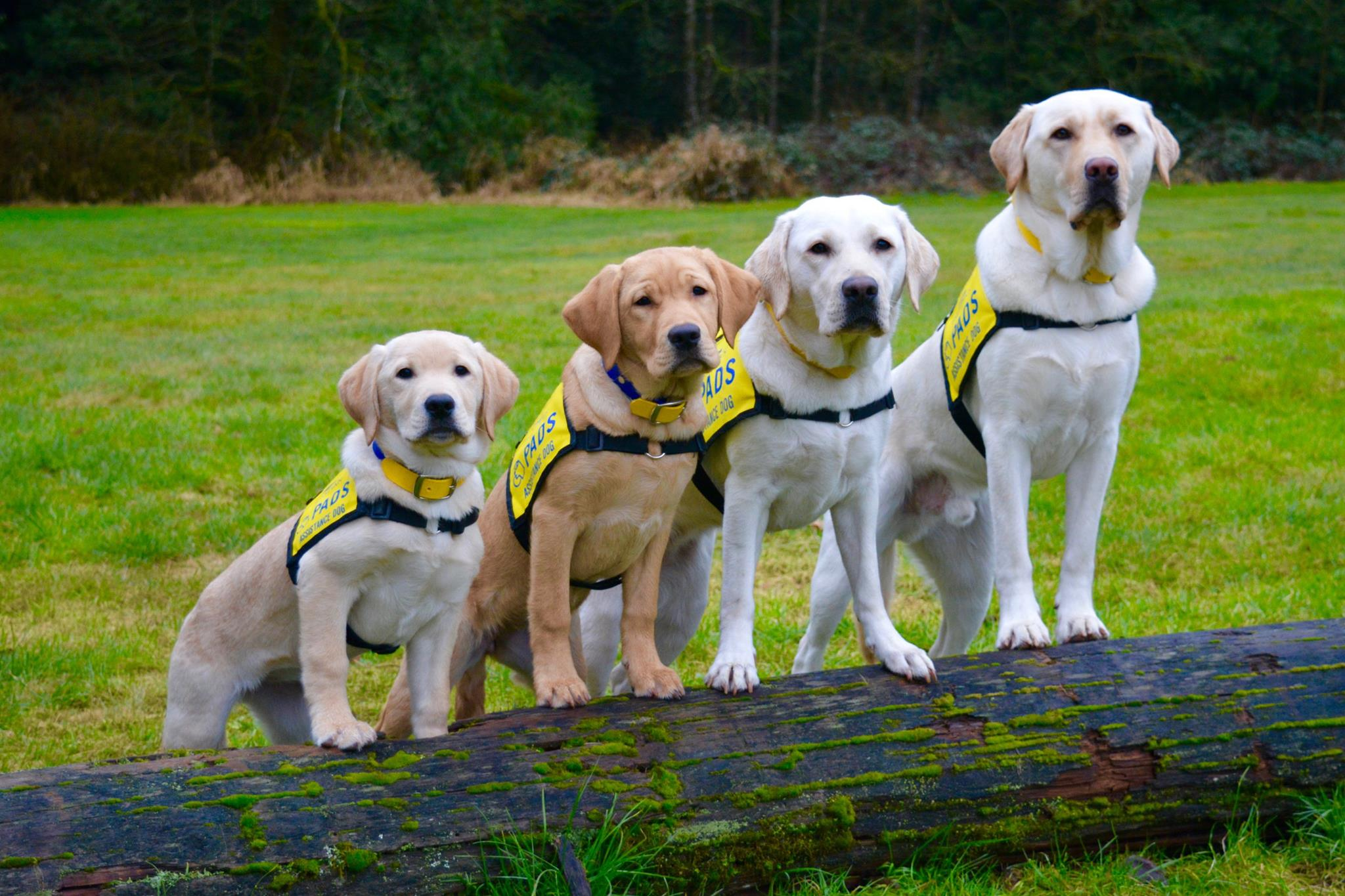 Welcome to PADS - The Pacific Assistance Dogs Society