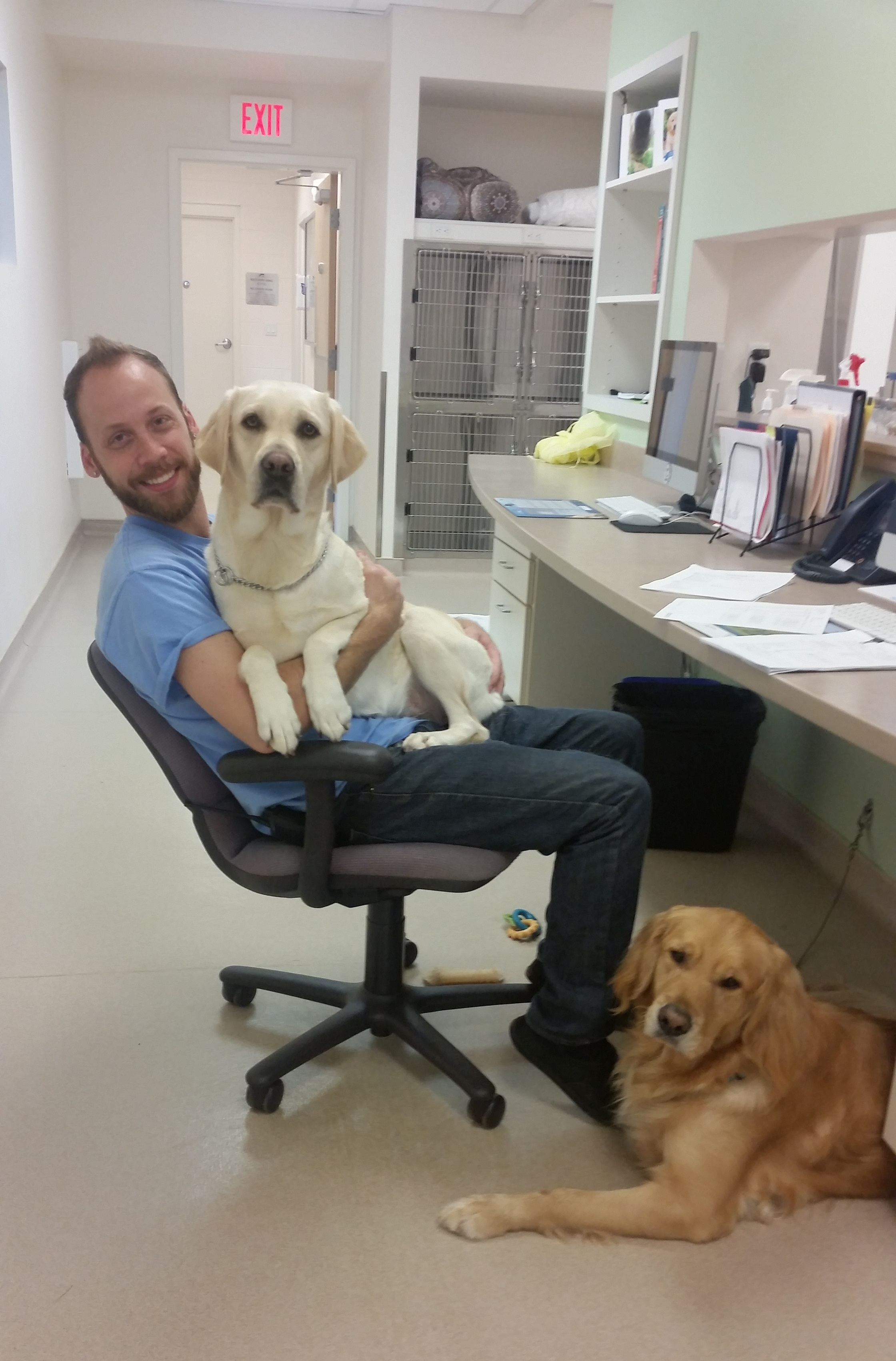 Halo, sitting on the lap of tech Kevin, in a South Eastern Guide Dogs office.
