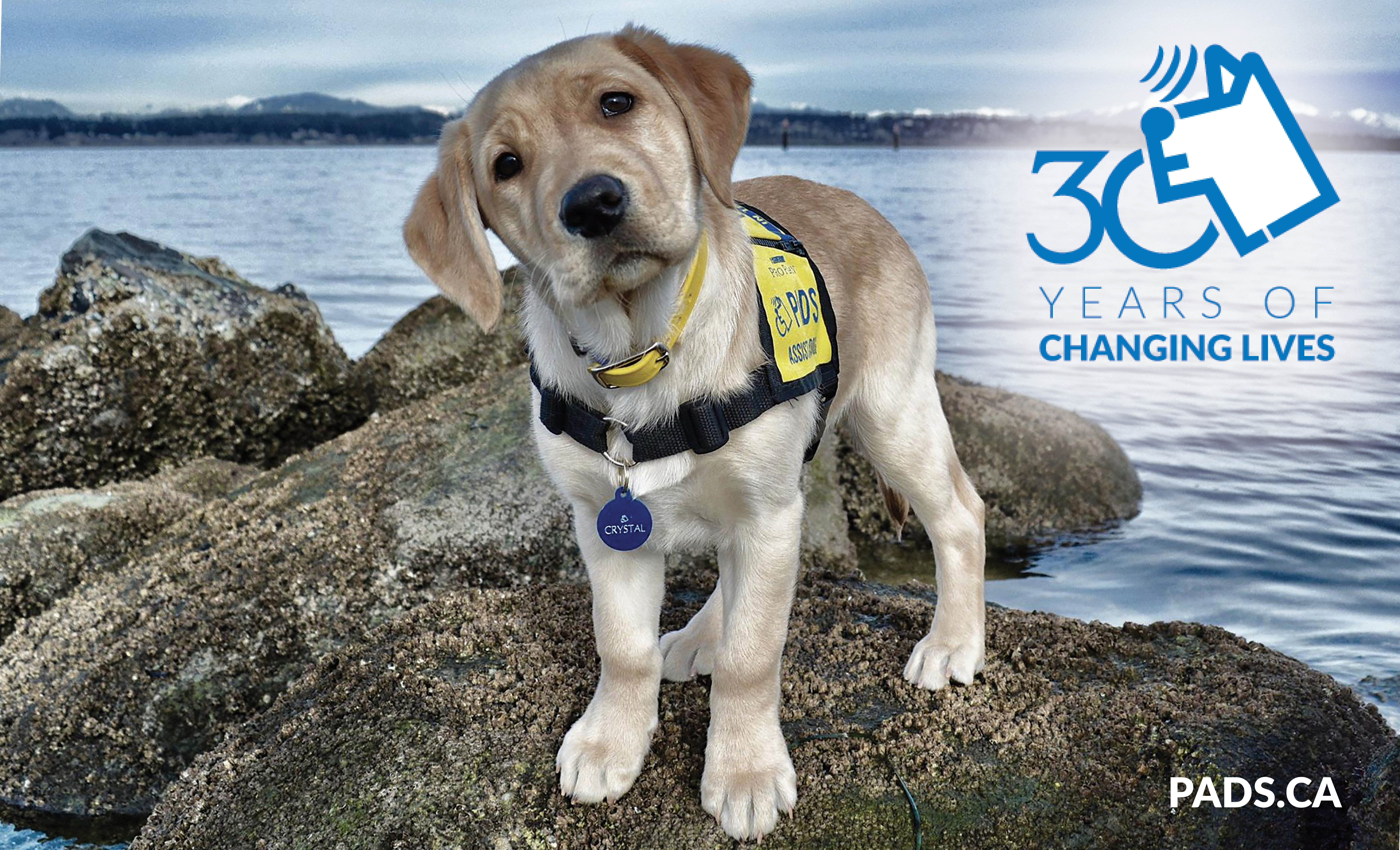 Today marks 30 years of changing lives… from humble beginnings of a small group of like-minded people that set out train rescue dogs to be hearing dogs for ...