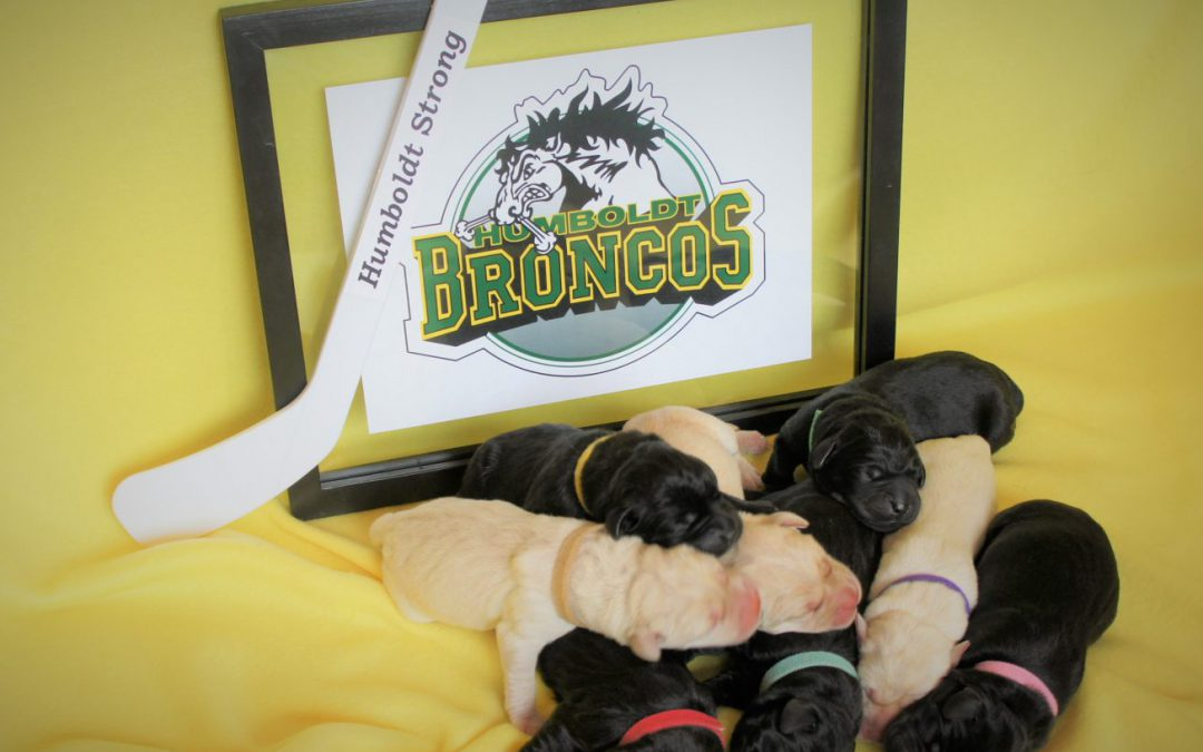Protected: Humboldt Strong Tribute Litter