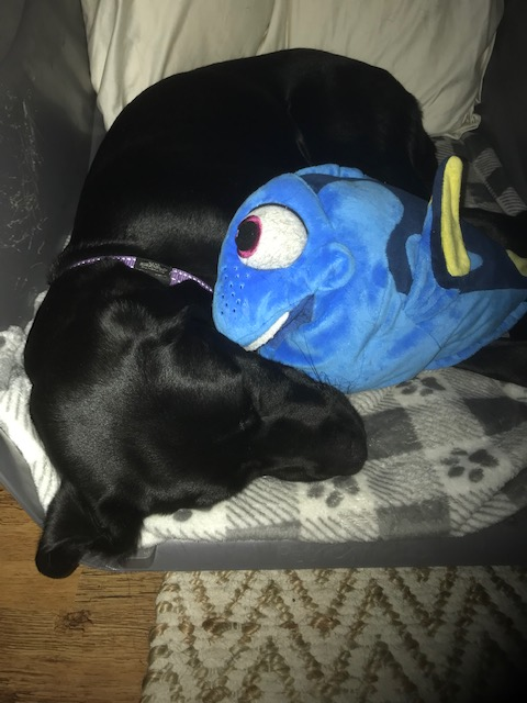 Dory - March 2019 1