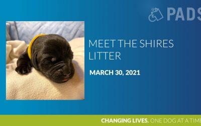 Meet the Shires Litter