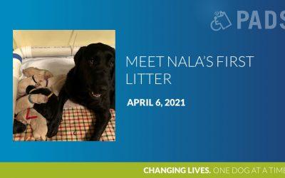 Nala's First Litter