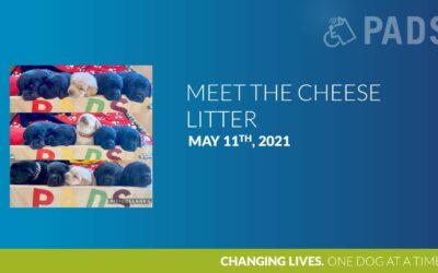 Meet The Cheese Litter!