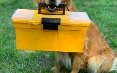 Evacuation Kit for Dogs